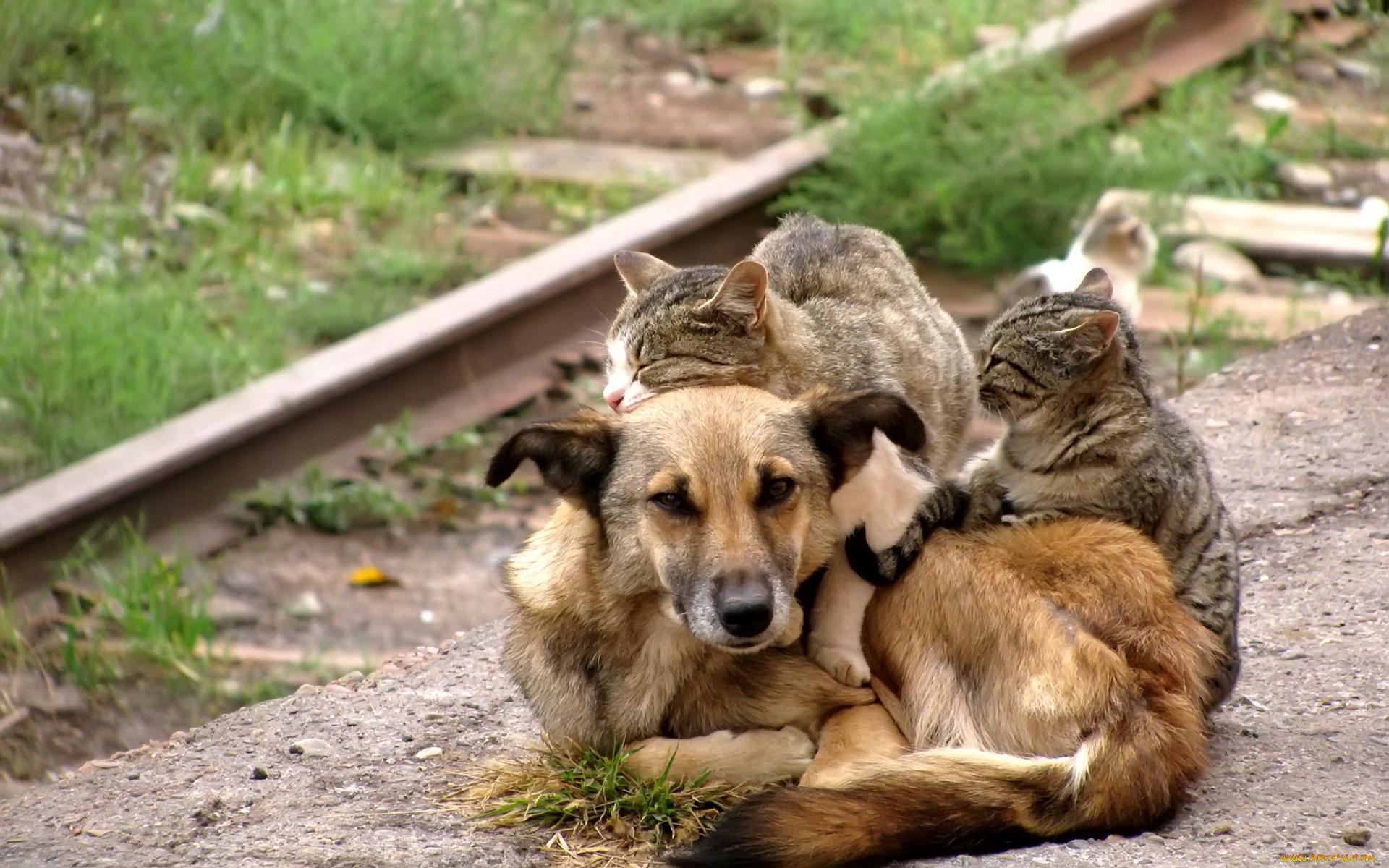 интересно больше чем картинки про животных зря многие мастеровитые